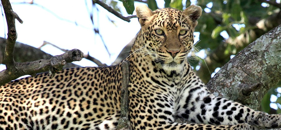 Big 5 Kruger National Park Tour