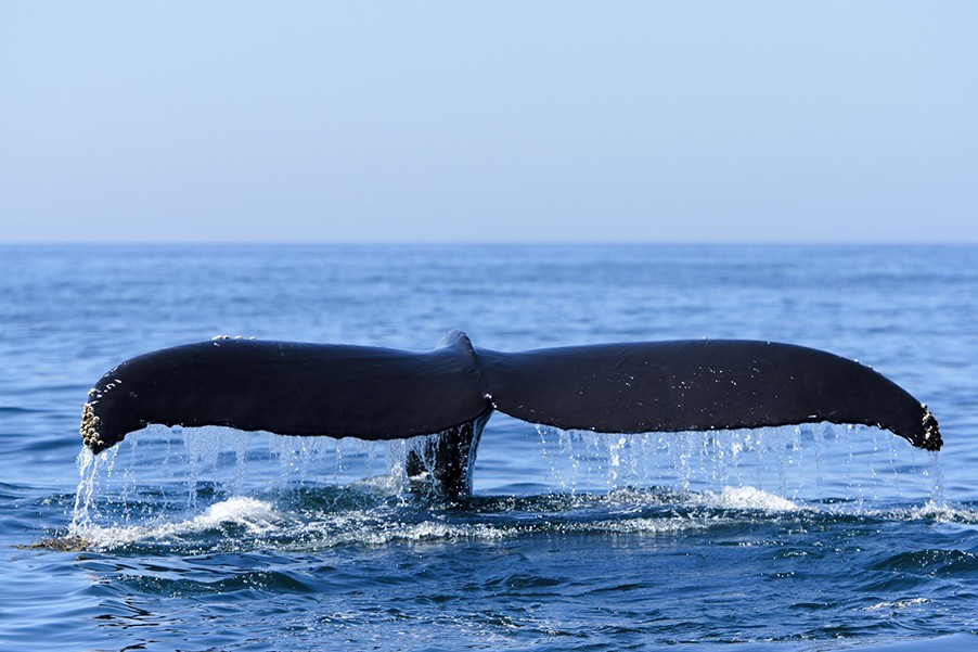 Hermanus & Whales Day Tour