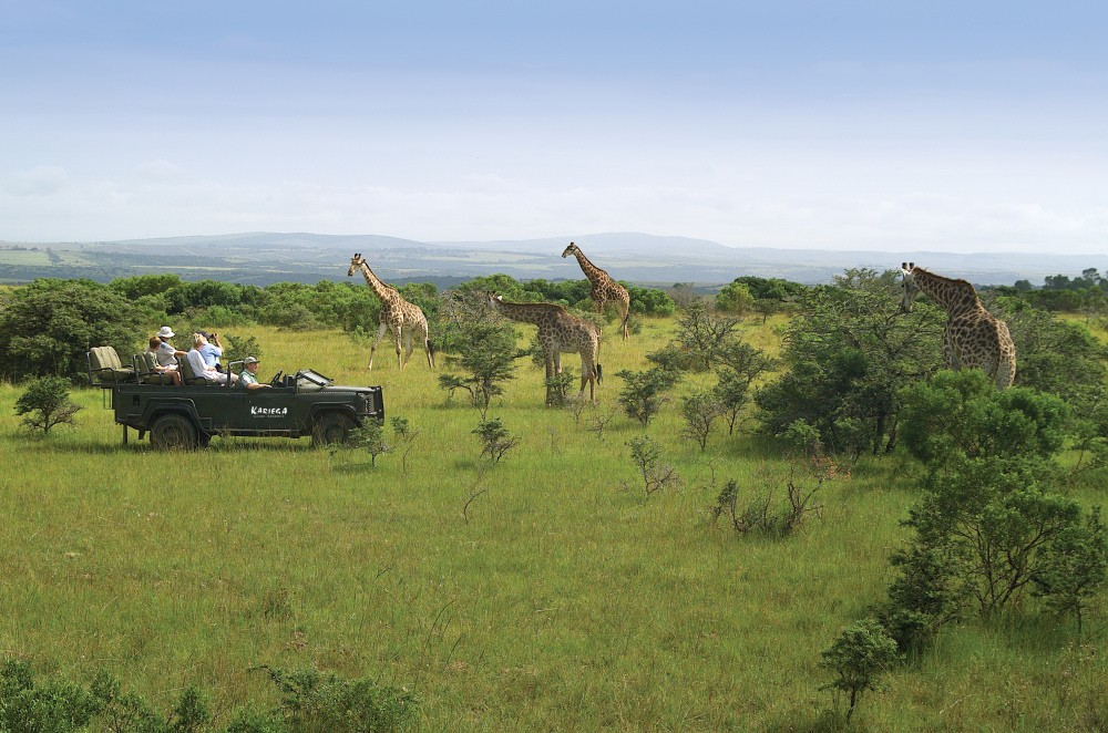 Eastern Cape Game Drive Giraffe