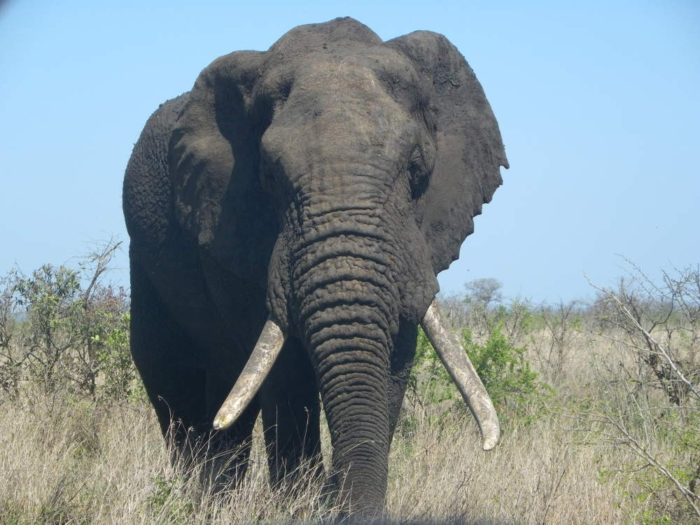 Big 5 Kruger National Park Safari & Panoramic Tour