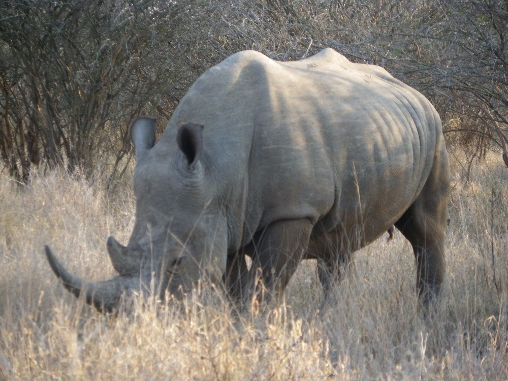 Garden Route & Big 5 Kruger Safari Tour