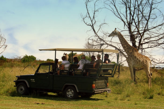 Garden Route & Wildlife Tour